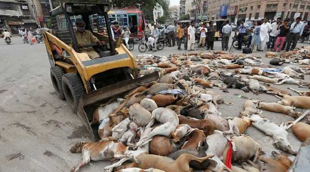 4923 Is it permissible to kill stray dogs in Islam 02