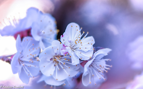 spring Transparency | by frederic.gombert