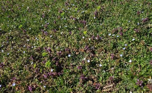 flowery meadow 2