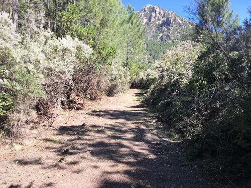 Le sentier après les travaux