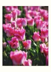 Les couleurs du printemps - Photo of Ganagobie
