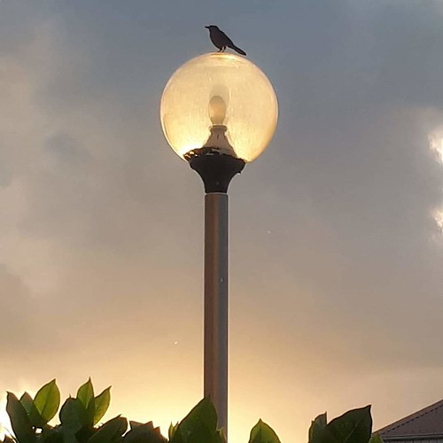 feed new soleil happy weekend matin me sunrise oiseaux birds happyweek morning