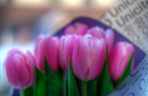 flowers on 22-02-2019 (1)