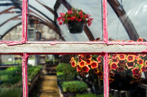 Pink Greenhouse Window
