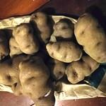 Māori potato