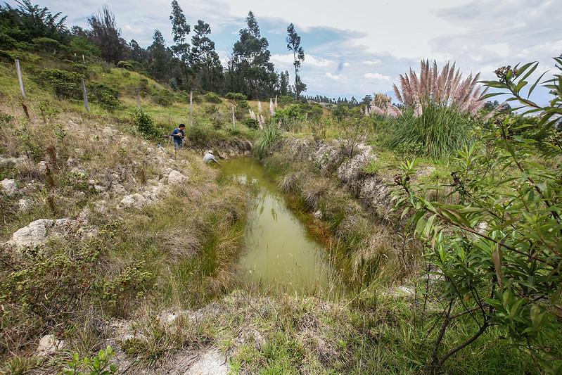Habitat Gastrotheca elicioi