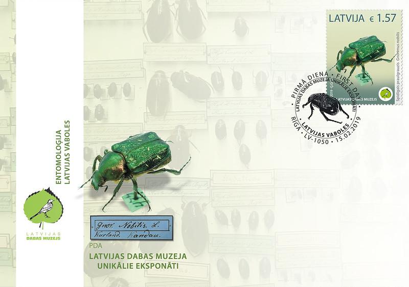 Aploksne Latvijas Dabas muzeja unikālie eksponāti - Spīdīgais praulgrauzis