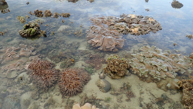 Various marine life on Pulau Semakau (East)