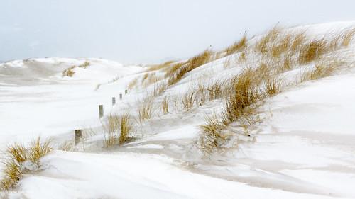 Snowy dunes (in explore)