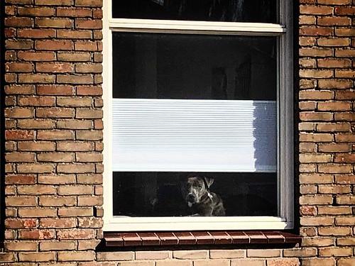 raam hond