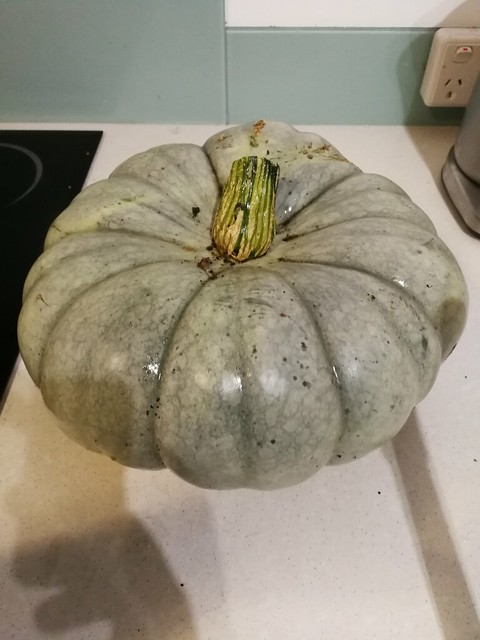 1 individual pumpkin weighing 3 kg
