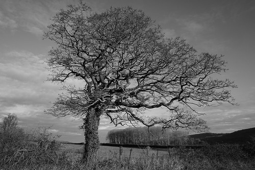 clevedon somerset england uk gb britain outdoors sony alpha ilce7rm2 a7rii zeiss trees tangled branches nature long time blackwhite blackandwhite black white grey monochrome bw fence field copse sky clouds landscape