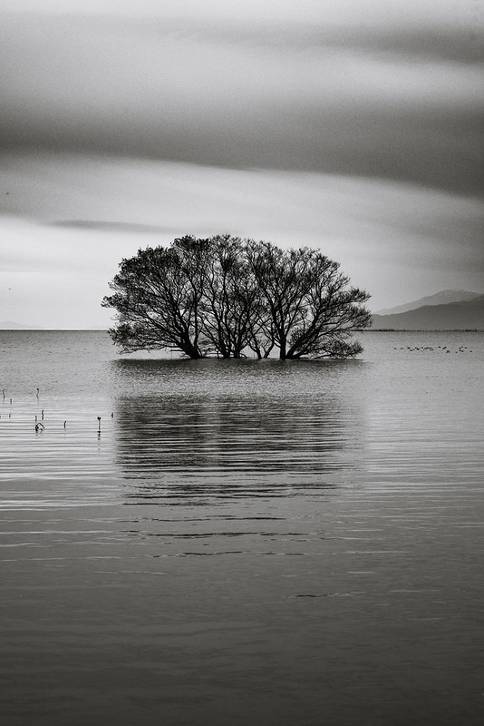Tree on the lake