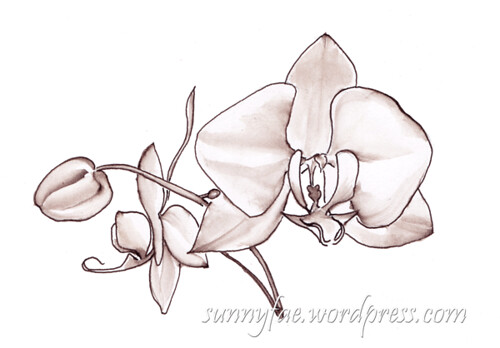 drawing of a white orchid in brown ink