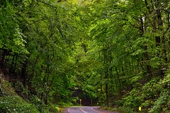 I Asked for God to Grant Me a Blessing and Realized It Was All Around Me in the Woods (Cuyahoga Valley National Park)