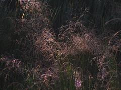 20080907 31685 1008 Jakobus Gräser - Photo of La Chaze-de-Peyre