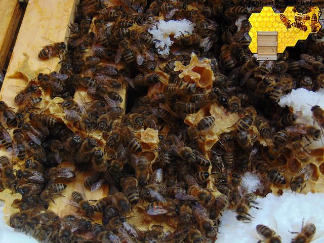Verschiedene Bienenbilder