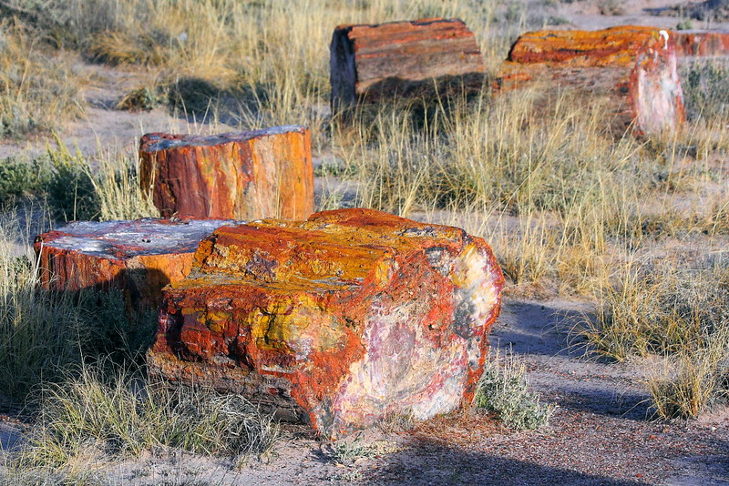 IMG_3320 Petrified Wood in Crystal Forest
