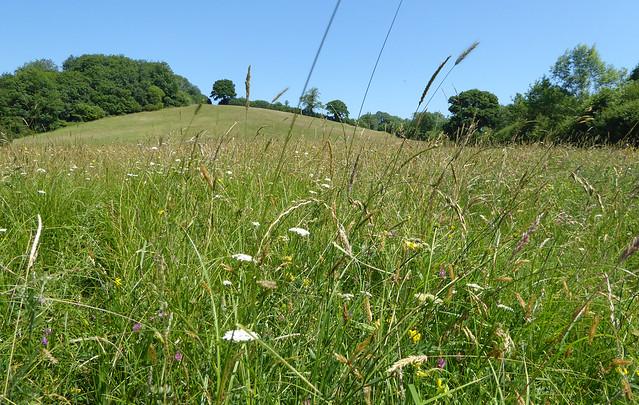 Marshwood meadow 2