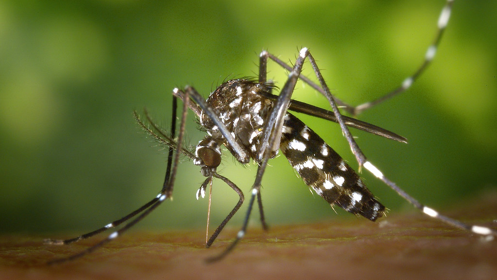 Photo of Mosquito