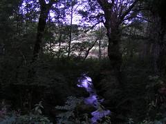 20080910 34482 1011 Jakobus Bach Wasser Wald
