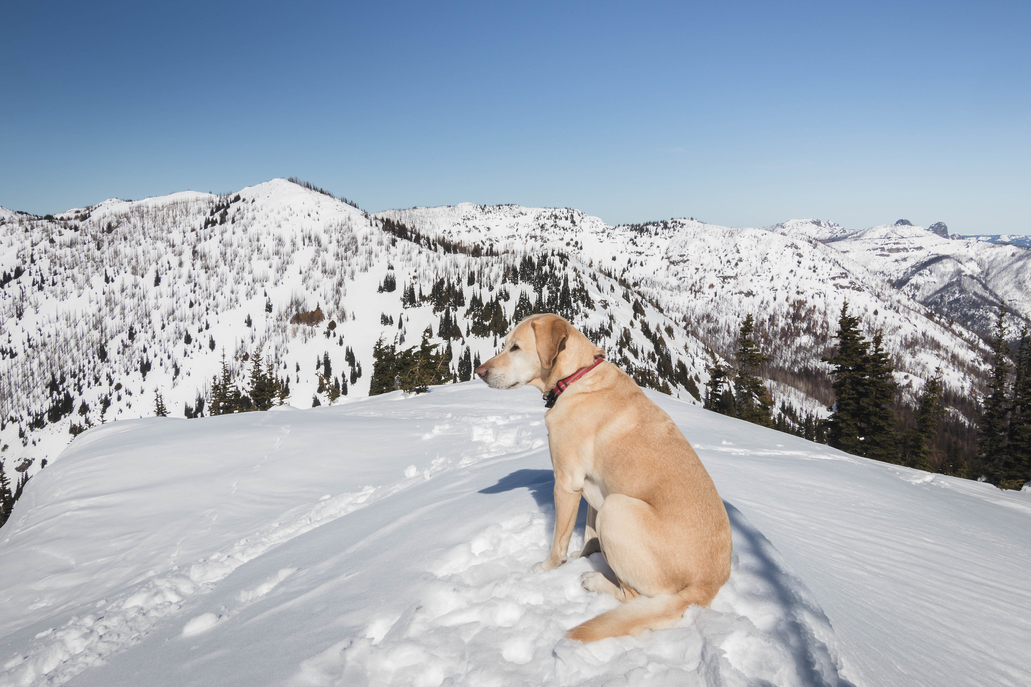 Summit dogs on Bullion Peak
