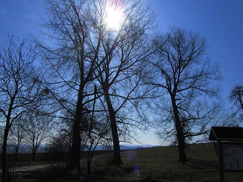 20110321 0208 129 Jakobus Bäume Sonne Schattenriss