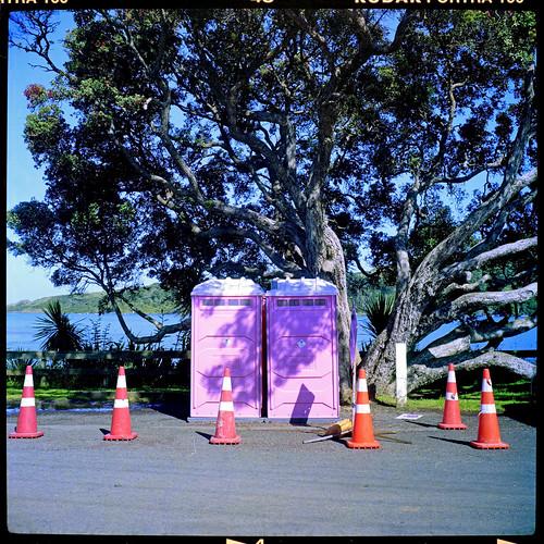 Pink Porta Loos Plus Pohutukawa Tree