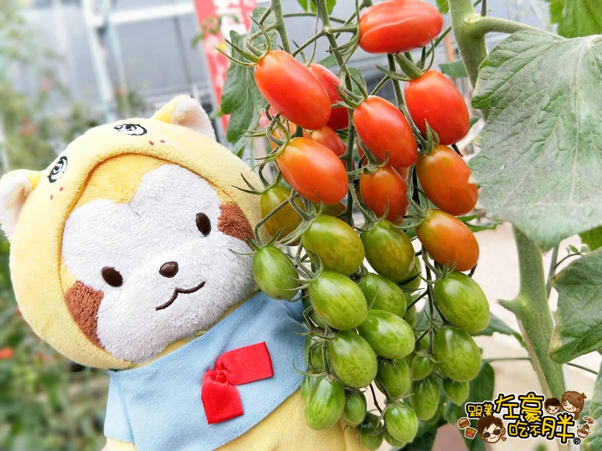 苗栗縣大湖灣潭玫瑰草莓園-20
