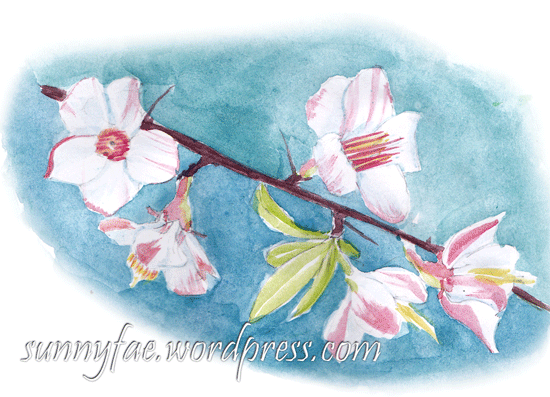 pink Japonica quince watercolour sketch