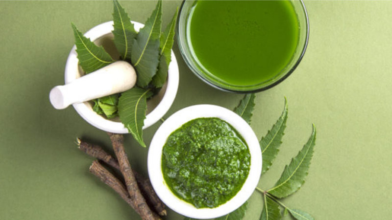 Neem Tree Information and Benefits Leaves, Oil and Bark
