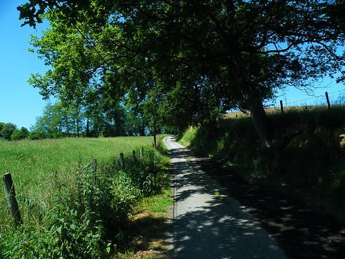 20090531 164 1110 Jakobus Weg Wiese Bäume