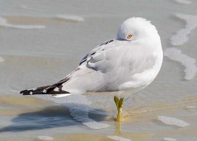 SC birds redux 01
