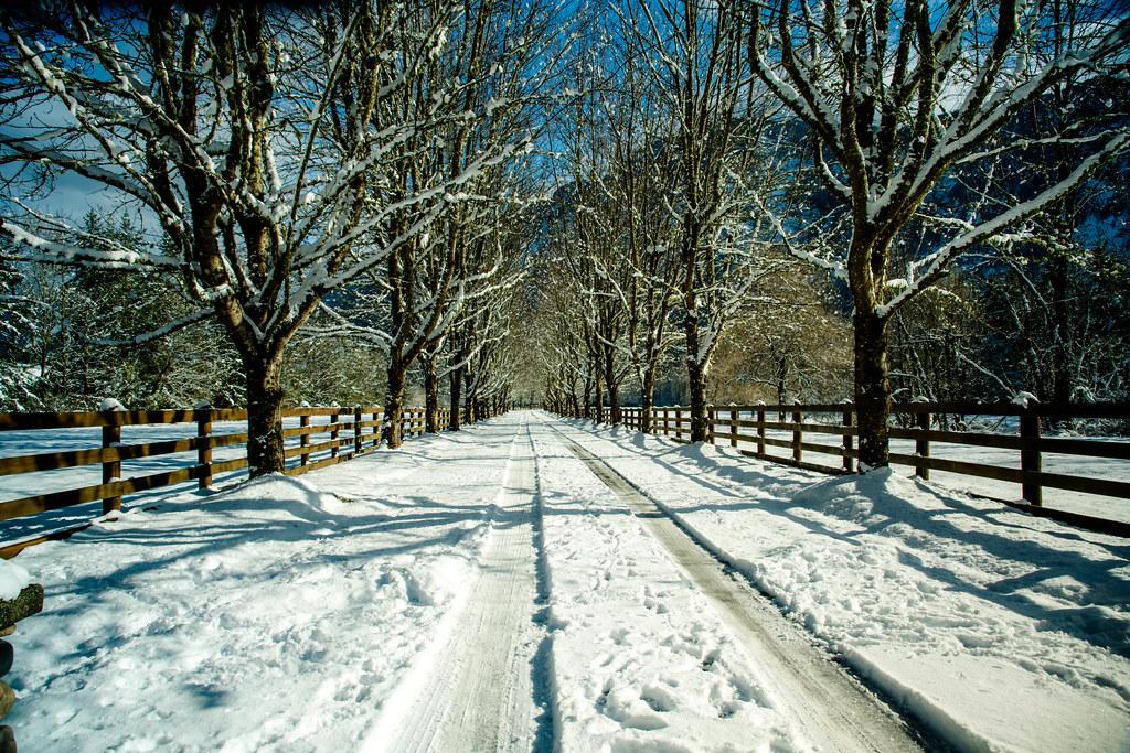 Winter 2 (1 of 1)