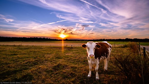 aquatower berdorf lu animal animals cow dusk europe evening hdr highdynamicrange landscape landscapes luxembourg mammals nightfall sunset sundown twilight wildlife mullerthal