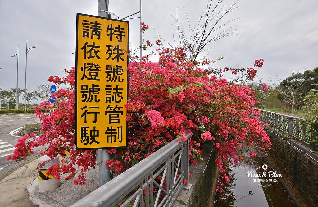 台中九重葛 東大公園 中科管理局11