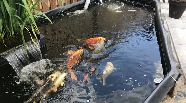 Foto 1.extra - Marco de la Penha - Ongeveer 33% van de watercirculatie gaat door het plantenfilter.