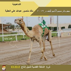 صور سباق الحيل والزمول (الأشواط العامة) مهرجان سمو الأمير المفدى صباح 8-4-2019