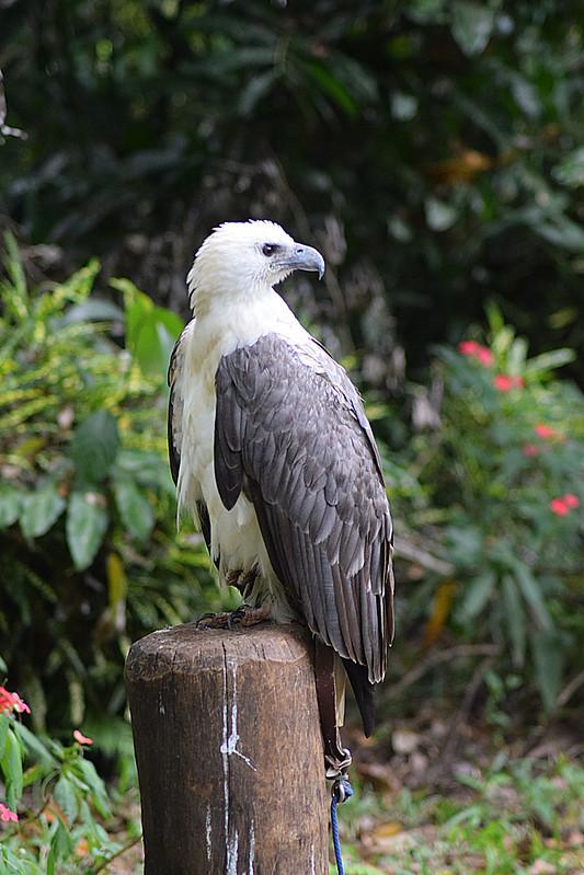 Philippine Eagle Conservation Center