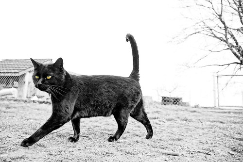 Catwalk ©twe2017☼