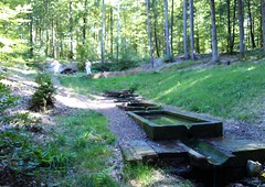 Fontaine perdue dans la forêt