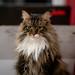 037 - cats cats cats- B9504245