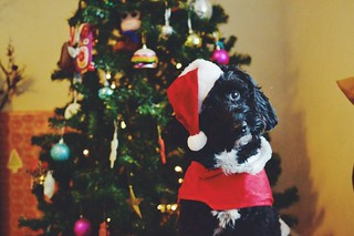 Christmas Puppy | by gallop080