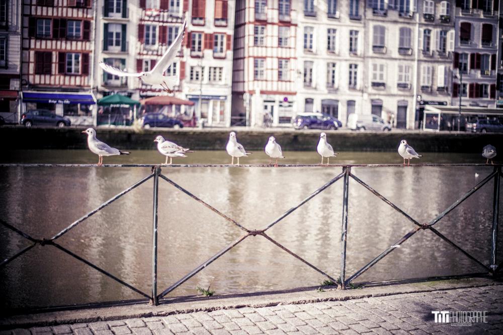 ARTISTE-Grenoble-2018-Sylvain SABARD