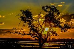 Sunset, Chobe Botswana
