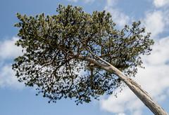 Newton Garth tree - upshot