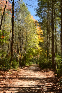 Autumn in Dupont State Forest, North Carolina