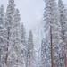 Winter View, Yosemite Falls