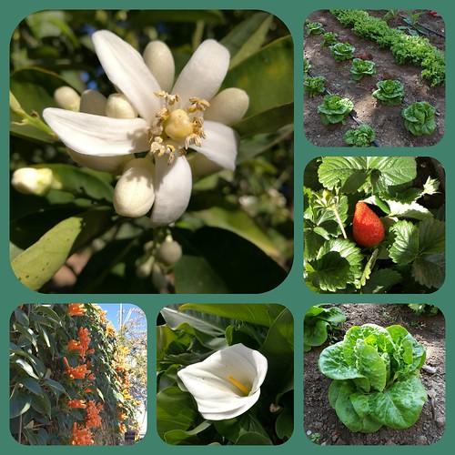 Primavera en huerto