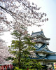 Photo:岩崎城(愛知県日進市)の桜 By kzy619
